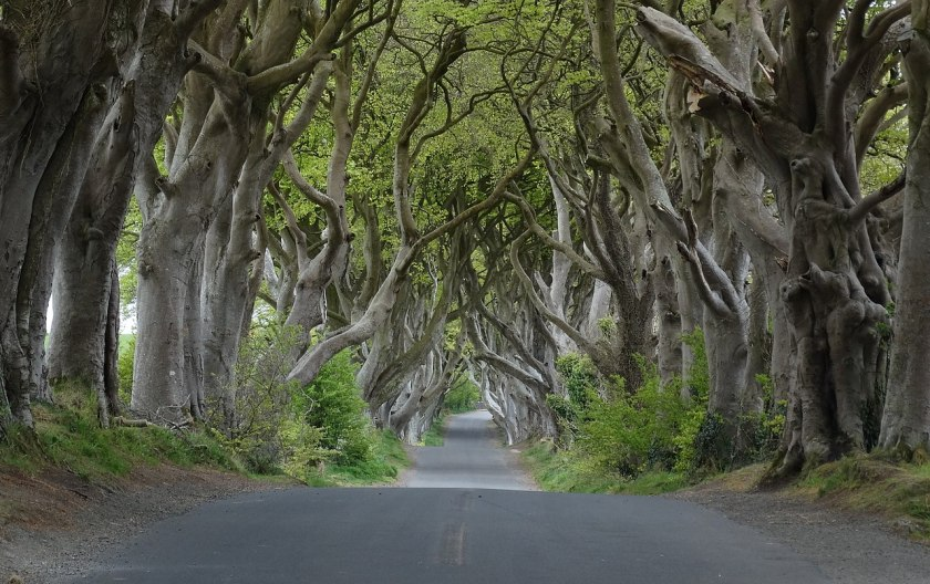 1280px-Dark_Hedges_near_Armoy,_Co_Antrim_(cropped).jpg